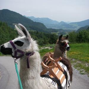 hotbox_Lama-Trekking II -
